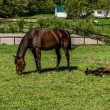 Mare and Filly Grazing in a Meadow — Stock Photo #75595253