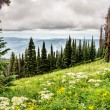 Hiking through the Meadows with Wild Flowers — Stock Photo #78775860