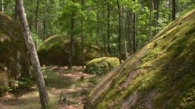 Forest stonehenge — Stock Video