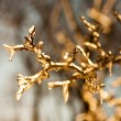 Frozen twig background - GOLD version — Stock Photo #60617057
