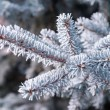 Frozen twig background — Stock Photo #61457431