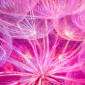 Colorful Pink Pastel Background - vivid abstract dandelion flowe — Stock Photo