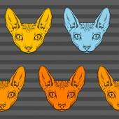 Hairless sphinx cat face graphics, pattern — Stock Photo