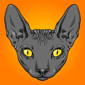 Hairless sphinx cat face graphics, outline — Stock Photo