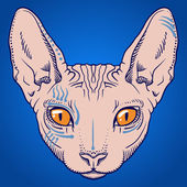 Hairless sphinx cat face graphics, outline — Stock Vector