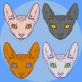 Set of hairless sphinx cat set face graphics, outline — Stock Vector