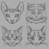 Set of Hand Drawn Wild Cat Portraits isolated — Stock Vector