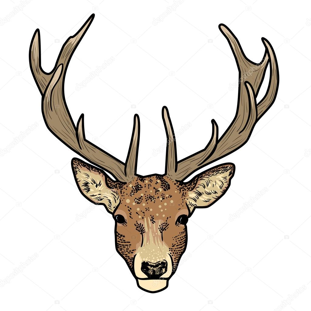 "Search Results for ""Deer Head Cartoon"" – Calendar 2015"