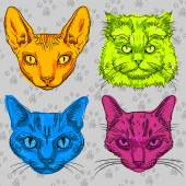 Four multi-colored cat isolated — Stock Vector