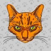 Orange tabby cat isolated — Stock Vector