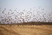 Der Flug der Vögel — Stockfoto