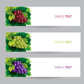 Grape, Vine, Banner — Stock Vector