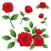 Roses Illustrate — Vector de stock