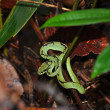 Green snake — Stock Photo #67319163