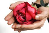 Roses for valentine day — Stock Photo
