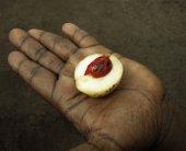 Mace within nutmeg fruit — Stock Photo