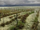 Algae cultivation in the ocean — Stock Photo