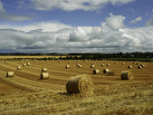 Reaped straw field and rows of straw — Stock Photo