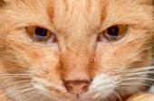 Cat portraits — Stock Photo