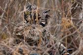 Duck hunter — Stock Photo