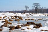 Swamp in the snow — Stock Photo