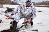 Hunter setting a leghold trap for beaver — Stock Photo