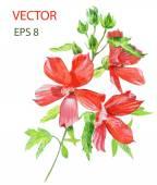 Beautiful  flower. Watercolor painting. — Stock Vector