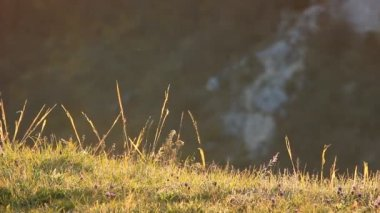 Sunrise grass — Stock Video