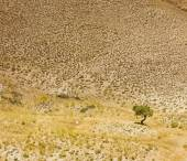 Lonely tree on a hill in the desert valley — Foto de Stock