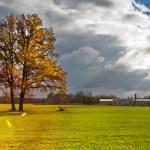 Yellow lonely oak tree in the green field — Stock Photo #58424085