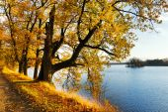 Yellow oak trees on Svet Pond embankment in Trebon — Stock Photo