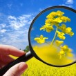 Colza - rapeseed plant - czech agriculture - ecological farming — Stock Photo #62873203