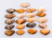 Cockleshells forms and objects — Stock Photo