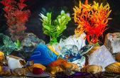 Aquarium — Stock Photo
