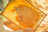 Honey frame — Stok fotoğraf