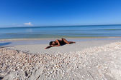 Woman lying on beach — Stock Photo