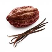 Cacao and vanilla pods — Stock Photo