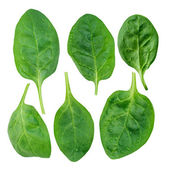 Yong spinach — Stock Photo