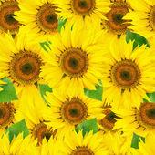 Seamless sunflower background — Stock Photo