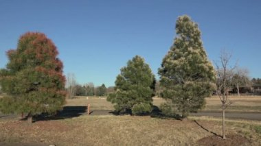 Local Government Poisoning Trees — Stock Video