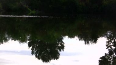 River reflection of trees — Stock Video