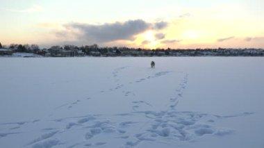 Playful Dog On Frozen Lake — Stock Video