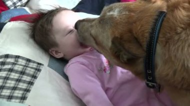 Dog kissing a baby — Stock Video