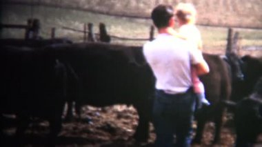Dad puts baby on cattle — Stock Video