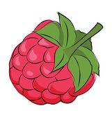 Raspberry Colored Sketchy Vector Icon — Stock Vector