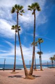Palm trees at the shore atlantic ocean — Стоковое фото