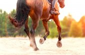 Bay horse galloping on the sand on a sunny day — Stock Photo