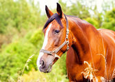 Portrait of a light brown horse in the grass — Stock Photo