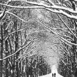 Two people are on the long avenue of trees along — Stock Photo #70768733