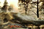 The smoke through the trees in forest fires — Stock Photo